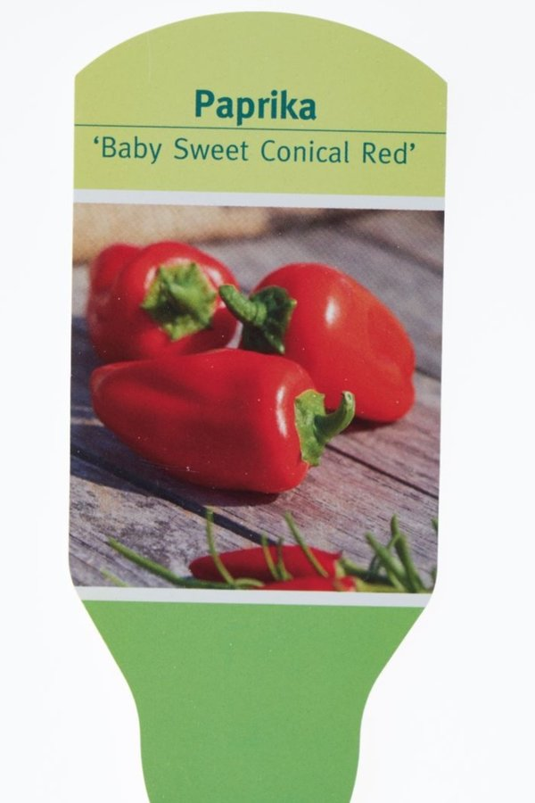 Paprika Baby sweet Conical Red